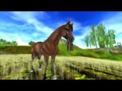 Quarter Horse Gallery