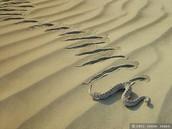Snake Sidewinder