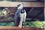 The Guyana Zoo