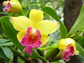 The Orchids Plant