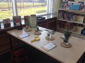 Plant Inquiry and Provocations