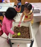 Exploring the acorns