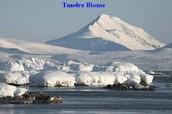 Artic Tundra