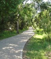 Our Beautiful Brushy Creek Trail