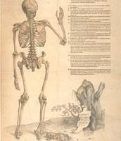 Tabulae anatomicae sex (1538)