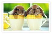 how to calm you bunnie