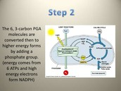 photosynthesis step 2