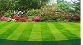 Our lawn care is the best all around.