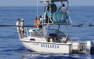 Killer Whales Catchers