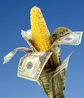 Crops Or Cash
