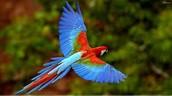 Beautiful birds!!
