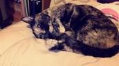 My Cat Natalie.