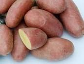 patate roseval