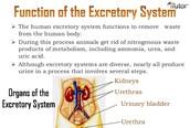 Excretory System Function: