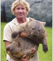 Size of Wombat