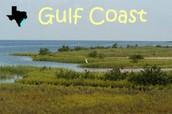The Gulf Coast Plains, Marshes, and Prairies