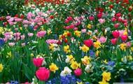 Pink, White, Yellow Roses ♥