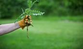 Pesky weeds in your garden?