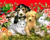our pets communities matter to