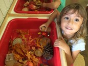 How would you begin provocation with this Reggio Emilia project?