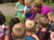 Sue Mohn introduced the kindergarteners to milk weed and boxelder bugs.