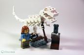 The study of Paleontology