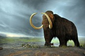 Mammoths and their ecosytem