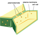 cartoon drawing of cell wall