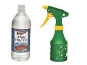 Vinegar - A Magic Solution