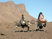 Nomadic people move place to place