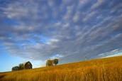 The Prairie Experience