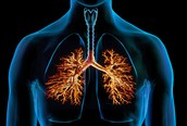 Increased Number of Respiratory Infections