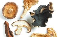 European Mushrooms