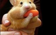 Zeus the Hamster