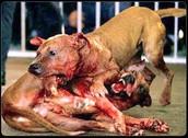 Dog Fighting worldwide