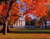 Amazing Campus