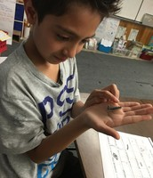 2nd grade Panthers take a hands-on approach to learning about caterpillars!