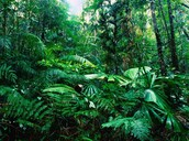 The inside of the amazon rain forest.