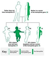 How is Hemophilia inherited?