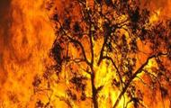 The firestorm burns strong.