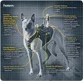 Diagram of a Service Dog