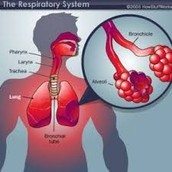 How do you relate the body's use of nutrients to the respiratory system?