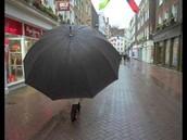 A over-sized umbrella, 99% off!