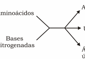 Excretas nitrogenadas: