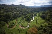 Stream flowing in eastern Honduras.