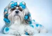 Home based grooming provides less stress and calmer environment for your pets.