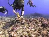 who causes the death of coral reefs and the solutions