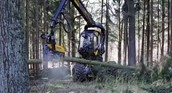 Chopping Down Trees