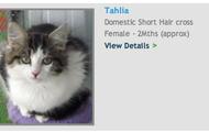 Adopt, kitten, Tahlia!
