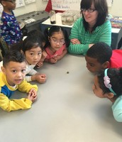 Miss Reis' class inspecting a snail during morning work